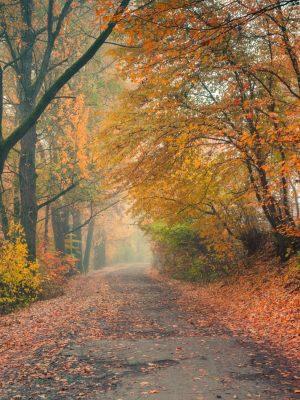 Painel Fotográfico Natureza Outono