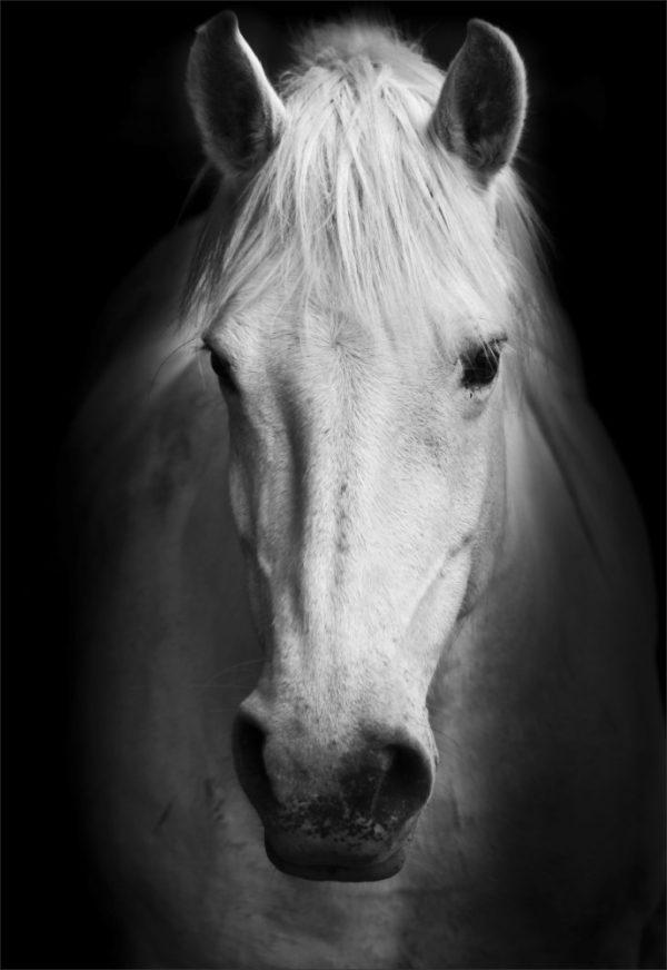 Placa Decorativa Cavalo