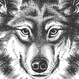 Placa Decorativa Lobo